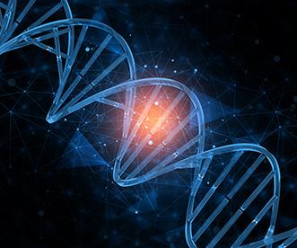 一种基于单限制性内切酶的无痕克隆方法